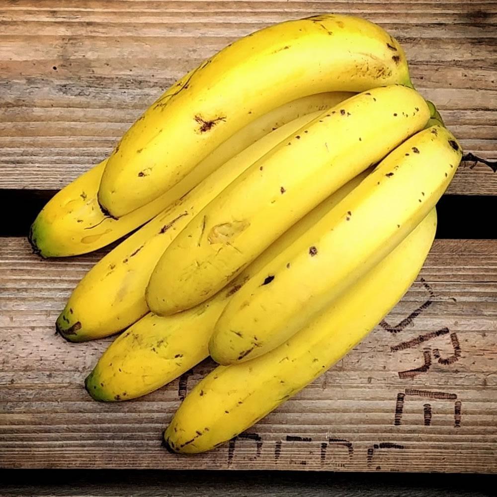 [Banana Nanica]